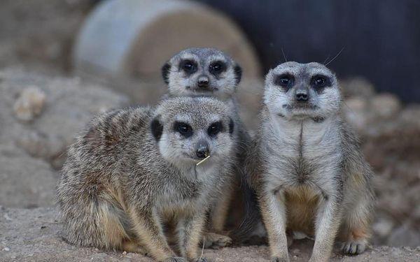 Nocování v ZOO Tábor včetně možnosti stát se ošetřovatelem zvířat3