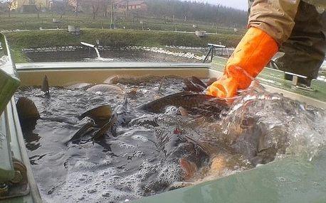 Chovatelem ryb na zkoušku pro dva