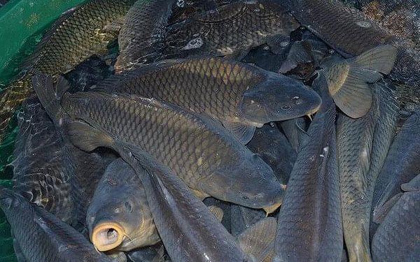 Chovatelem ryb na zkoušku pro dva | Bečov nad Teplou | duben - listopad | 4 hodiny3