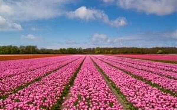 Jižní Holandsko - za krásou květin - 5 dní se snídaní2