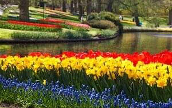 Jižní Holandsko - za krásou květin - 5 dní se snídaní