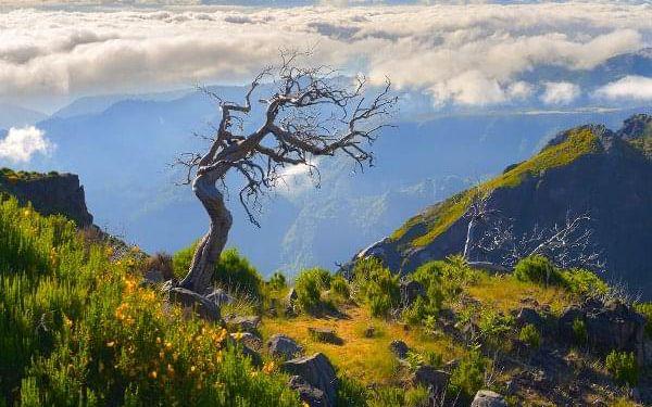 Divoká Madeira