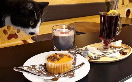 KočKavárna: nápoj a dezert ve společnosti 9 koček