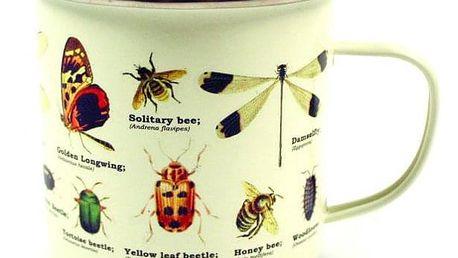 Plecháček - Hmyz