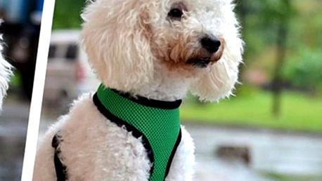 Postroj pro psa - dodání do 2 dnů