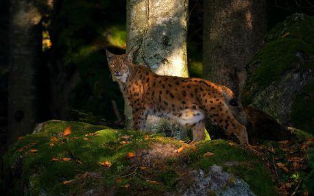 Jednodenní kurz fotografování v NP Bavorský les pro 1 osobu