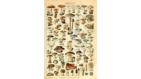 Plakát s houbami Lonnie - dodání do 2 dnů
