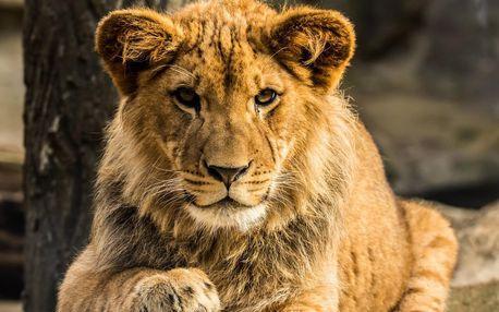 Jednodenní fotokurz v zoo v lokalitě dle výběru