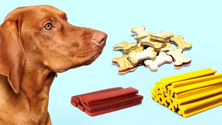 Pro pejsky na zakousnutí: dentální a jiné pamlsky