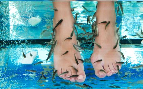Netradiční péče: Rybí pedikúra Garra Rufa