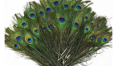 Paví peří 23 - 30 cm - 20 kusů - dodání do 2 dnů