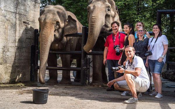 Fotografický kurz v českých zoo s Patrikem Staňkem5
