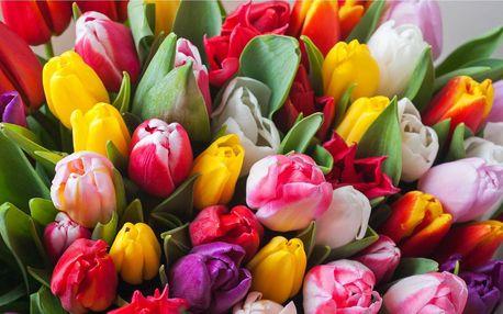 Kytice tulipánů pro vaši lásku