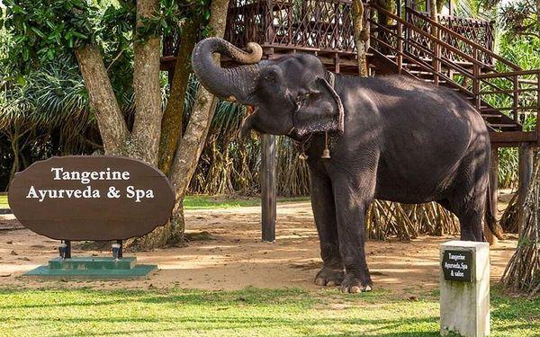 TANGERINE BEACH HOTEL, Kalutara, letecky, all inclusive5