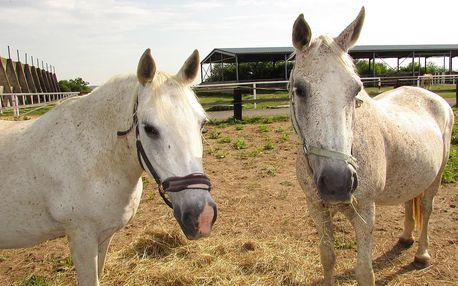 Návštěva ranče s jízdou na koni i krmením zvířátek