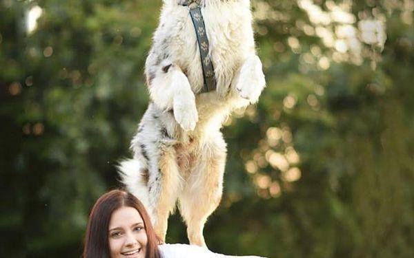Online psí škola: 19 lekcí, 2 eBooky a roční poradenství od profesionálů, U vás doma, 19 lekcí, 1 osoba5