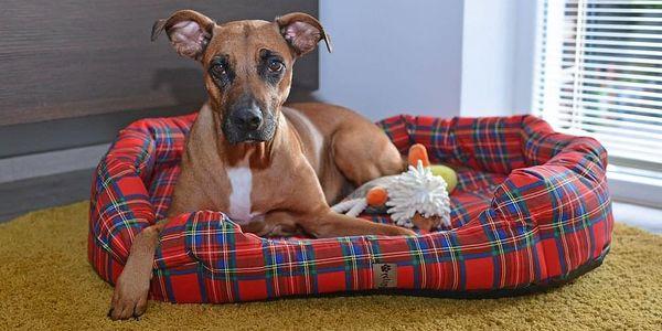 PETSY Scotty 60096 Pelíšek pro psa - 90 cm3