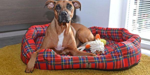 PETSY Scotty 60096 Pelíšek pro psa - 90 cm4