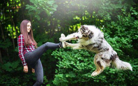 Online psí škola - kurz základní poslušnosti + dárky