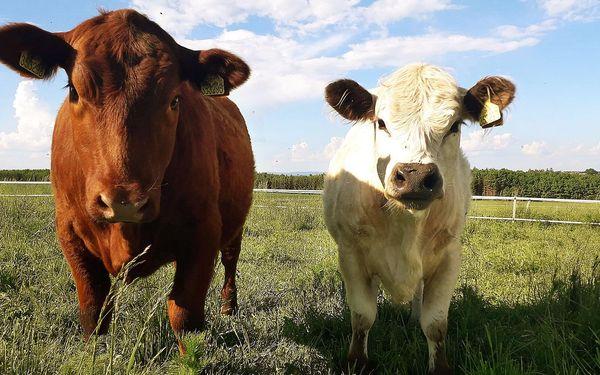 Návštěva zvířat na ranči s výkladem o chovu a výcviku4