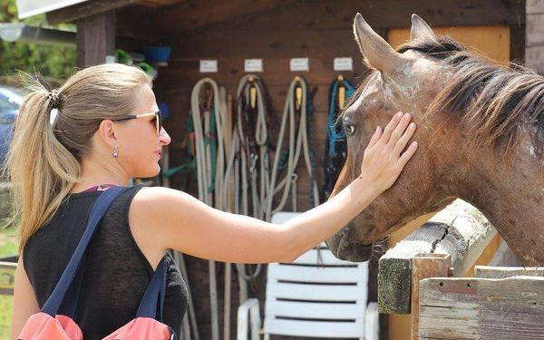 Návštěva zvířat na ranči s výkladem o chovu a výcviku5
