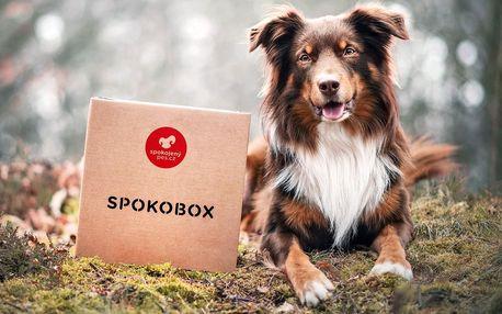 Spokobox: krabice plná pokladů pro pejsky