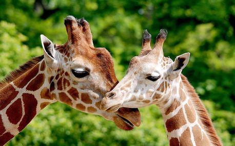 Safari Park Dvůr Králové a barokní hospitál Kuks