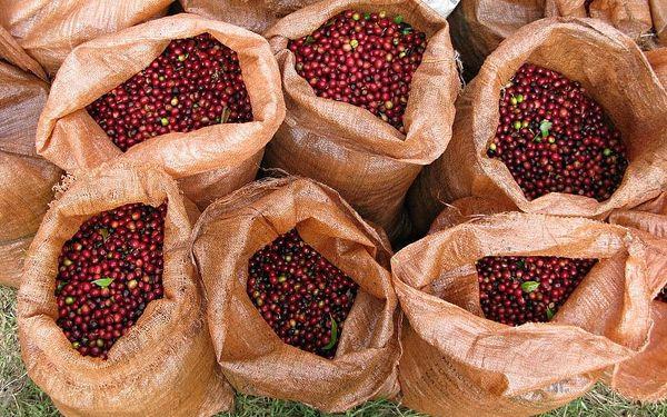 Online kurz přípravy kávy s pražírnou DOUBLESHOT + 5 druhů špičkové kávy + sada na přípravu kávy + kvalitní mlýnek, U vás doma, Domácí příprava kávy3