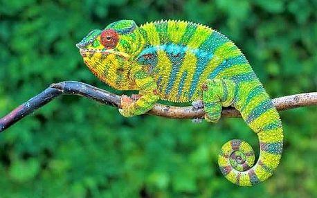 Madagaskar - Osmý kontinent světa