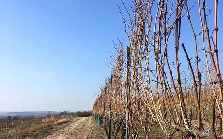 Domácí degustace českých vín: balíček z vinařství Kraus + bedna šesti druhů vína + online přenos se sommelierem
