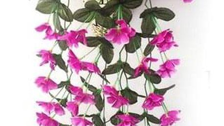 Závěsná rostlina s barevnými květy