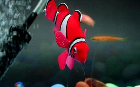 Umělohmotná svítící rybička do akvária