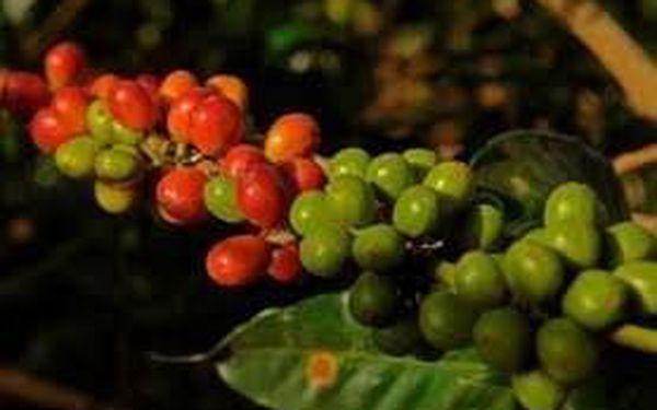 Čerstvě mletá zelená káva, 500 g4