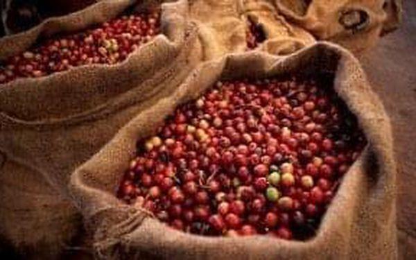 Čerstvě mletá zelená káva, 500 g5