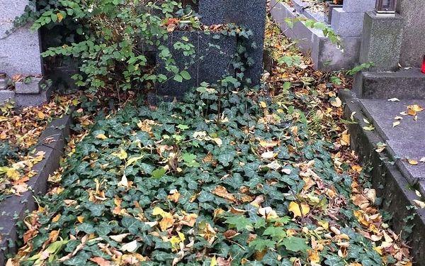 Jednorázový úklid hrobového místa4