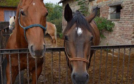 2 hodiny na ranči: péče o koně i vyjížďka do přírody