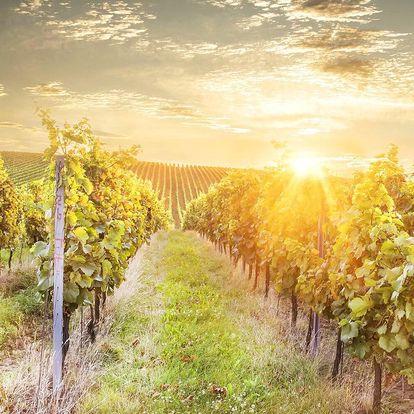 Pohoda mezi vinicemi s polopenzí a degustací vín
