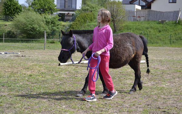 Vyjížďka na hřbetě fjordských koní pro jednoho4