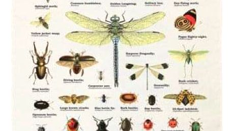Utěrka s hmyzem