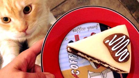 Otevřený voucher na 300 Kč do kočičí kavárny