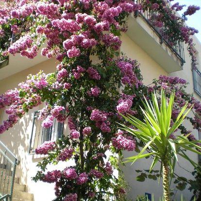 Chorvatsko, Drvenik: Apartments Marino