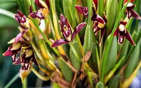 Výstava orchidejí a Drážďany, Sasko