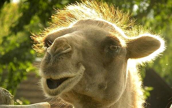 Rodinný pobyt na farmě Wenet plné zvířátek | Broumov | 1.1.-30.4. a 1.9.-19.12. | 3 dny/2 noci.2