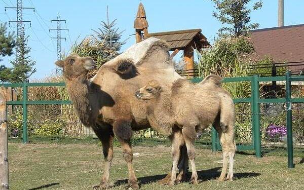 Rodinný pobyt na farmě Wenet plné zvířátek | Broumov | 1.1.-30.4. a 1.9.-19.12. | 3 dny/2 noci.4