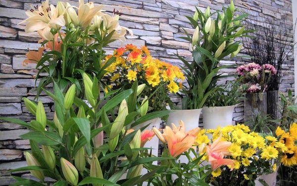 15 tulipánů2