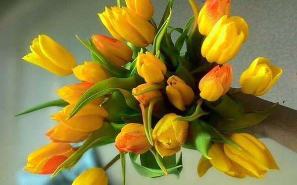 15 tulipánů3