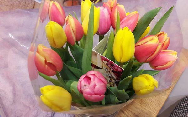 15 tulipánů5