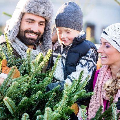 Čerstvě uříznuté vánoční jedle a smrky z Beskyd