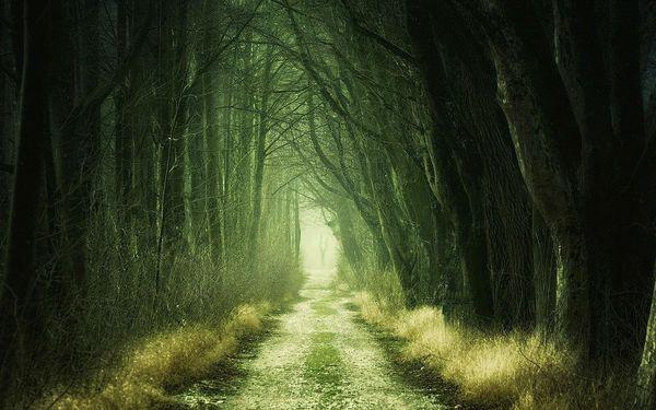 Lovci duchů: Zakletá stezka2