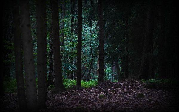 Lovci duchů: Zakletá stezka4